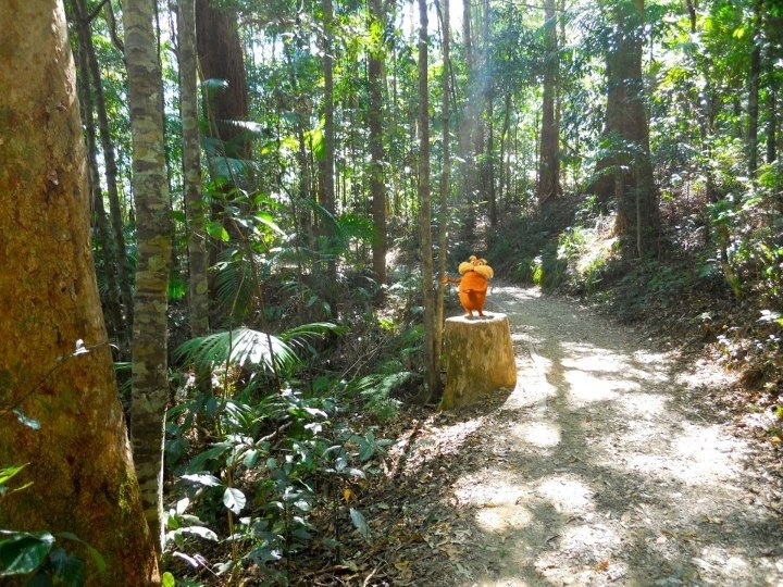 A quiet walk to Kondalilla Falls (Queensland) and who should I see????