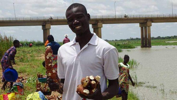Ils gagnent entre 800 000 et un million de Francs Cfa de bénéfice après chaque récolte.  C'est sur le rivage du fleuve Chari, sous le pont à double voies qu'on observe le grand champ de manioc