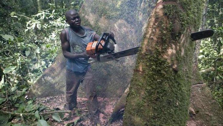 RDC: Greenpeace dénonce le «chaos organisé» dans le secteur du bois Selon l'organisation de défense de la nature Greenpeace, le secteur du bois en RDC, qui est toujours en train de se reconstruire après des décennies de guerre, est particulièrement peu réglementé. Selon... http://www.rfi.fr/afrique/20150311-rdc-greenpeace-denonce-le-chaos-organise-le-secteur-bois-corruption-transparency-economie/