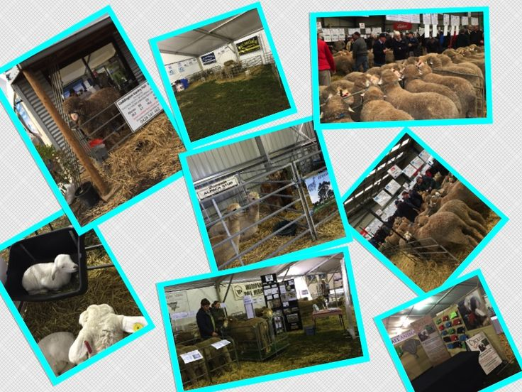 There was so much to see at Hamilton Sheepvention last week. It was totally amazing!!