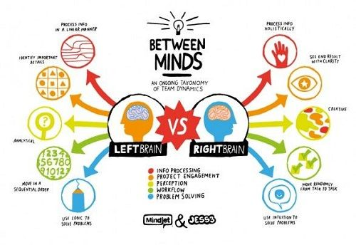 functions and characteristics of left and right brain