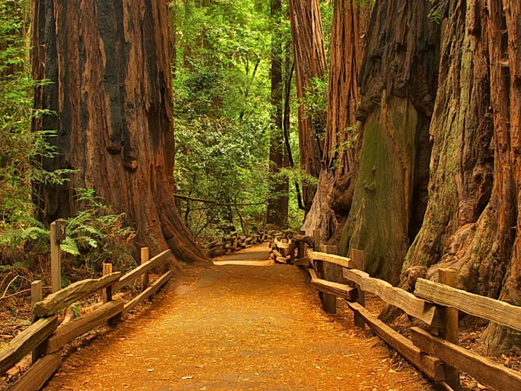 I must see the redwood and sequoia before they plant me.