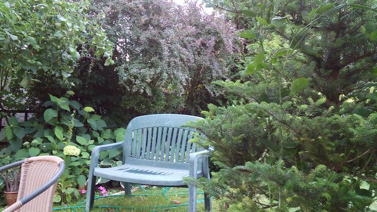 mój ogrod