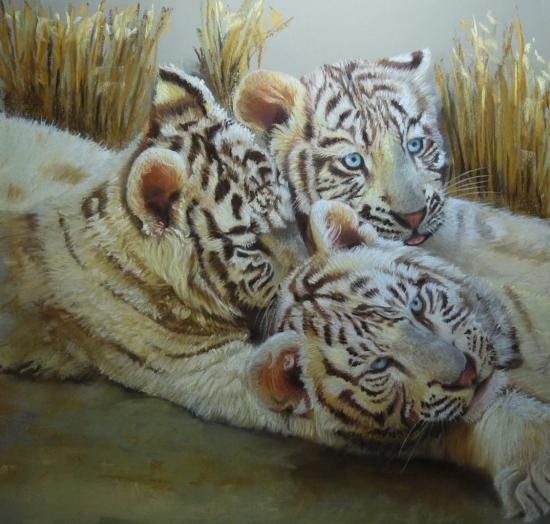 Les 3 freres jeune tigre 50x50 cm