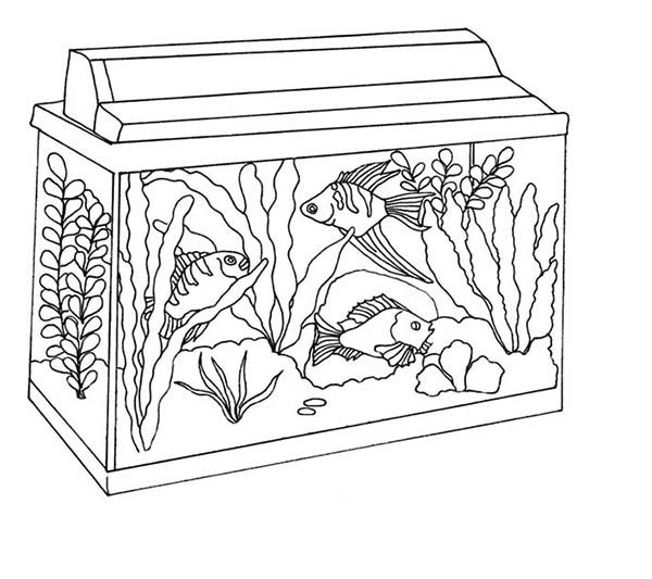Colouring Pages Fish Tank Coloring Pages Fish Tank Drawing Tank Drawing