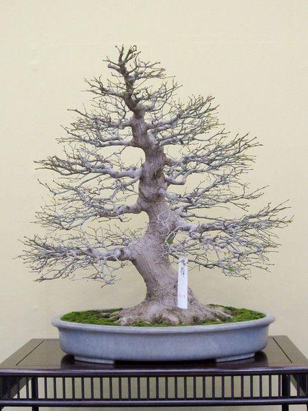 las 25 mejores ideas sobre tatuajes de rboles bonsai en pinterest tatuaje de bonsai bonsai. Black Bedroom Furniture Sets. Home Design Ideas