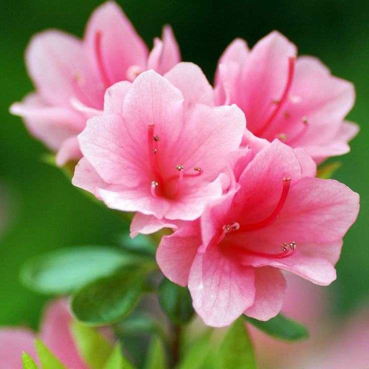 1000  images about bloeiende planten met pot on pinterest
