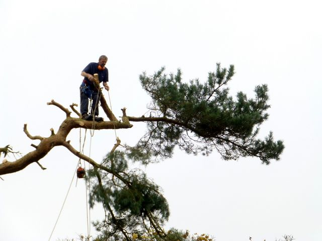 We are one stop company for all your tree surgery needs! No job is too small and none is to large. Call +61414627627 for your expert and professional tree surgeons Sydney https://talltimberstreeservices.com.au/.