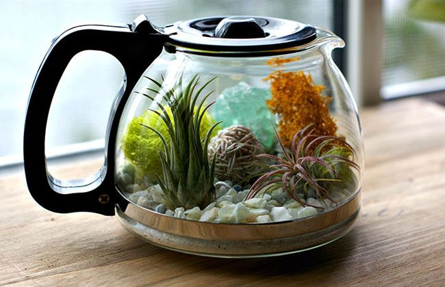 This cute terrarium in a coffee pot is super easy to DIY » Lost At E Minor: For creative people