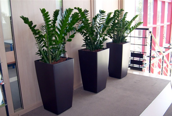 Consider style: Pay attention to the look of the plant and container; the right combo (here, Zamioculcas in sleek bronze pots) can fit right into your look, be it modern, country, traditional, or eclectic.