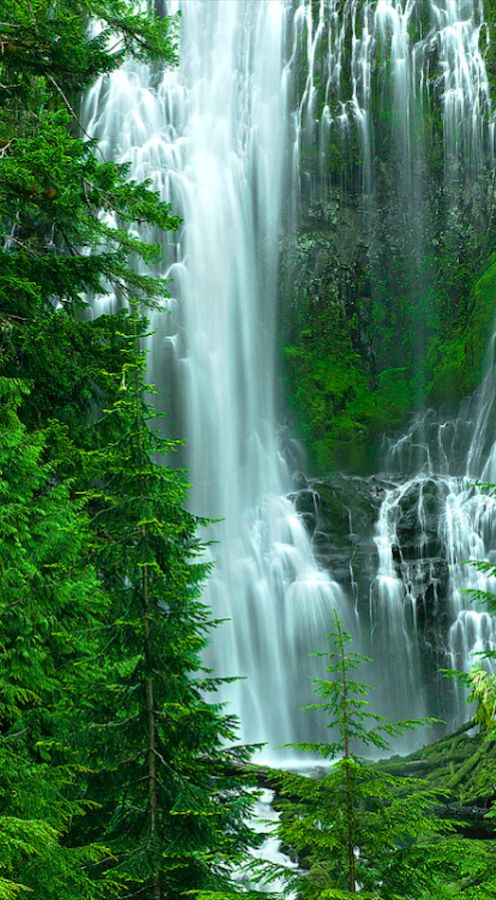 Proxy Falls in the Willamette National Forest east of Eugene, Oregon • photo: Stan Newman on 500px