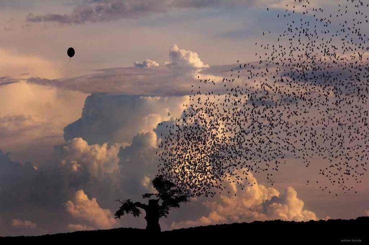 Photo Manipulations by Adrian Borda