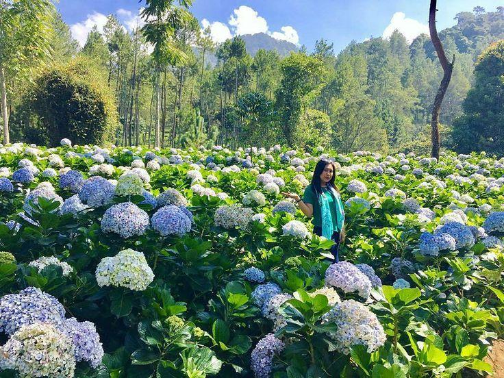 From @bebeb_icha  Tak usah jauh2 ke belanda klo dsni msh byk kebun bunga yg tersembunyi   Loc : Coban Talun Kota Batu
