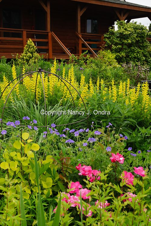 The side garden at Hayefield in early summer, with perennials, roses, ornamental grasses, and shrubs [©Nancy J. Ondra]