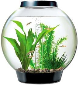 The 25 Best Ideas About Biorb Fish Tank On Pinterest 1