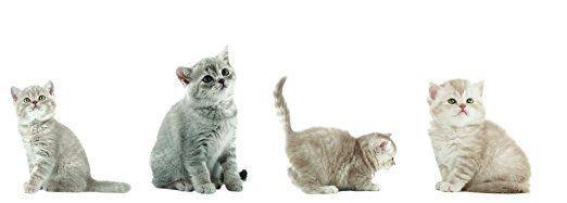 8 x Fenstersticker Katzen, Kätzchen, Katzenkinder, Fensterbilder, Windowsticker, Fensterdeko, Fenster Tattoo, Fensterfolie, Fliesensticker, Fliesenaufkleber, 4 verschiedene Designs, wiederverwendbar