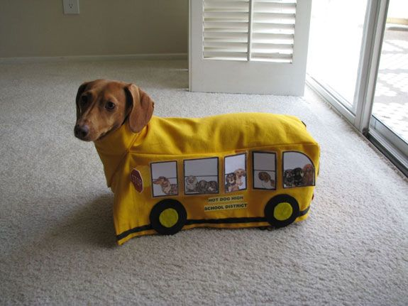 ohhhhhhh: Halloween Costume, Animals, Costumes, Dogs, Dachshund, Pet, Doxie, Funny, School Buses
