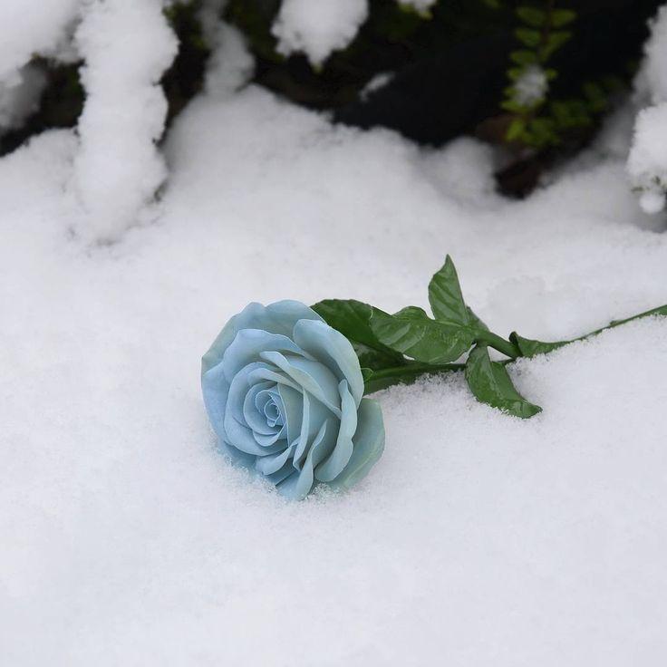 Snowy blue rose. Porcelain flower, stem and leaves. Do you like blue roses 😊? #porcelain…»