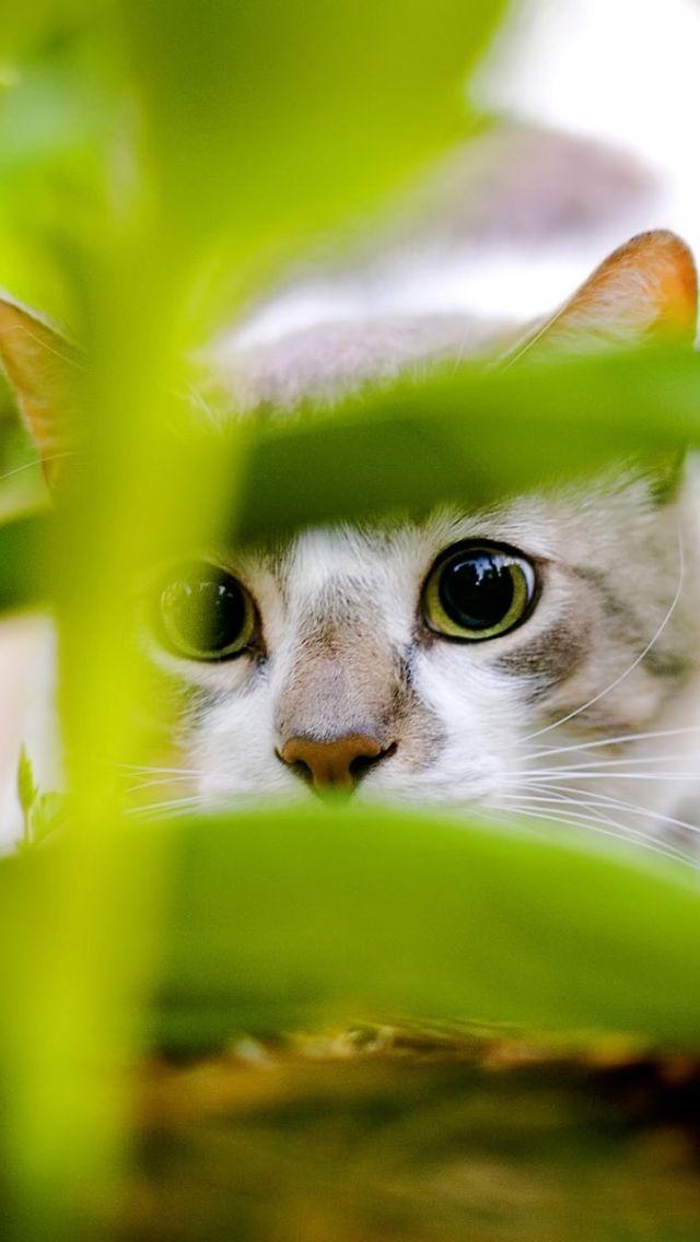 Cute Cat Wallpaper 3d