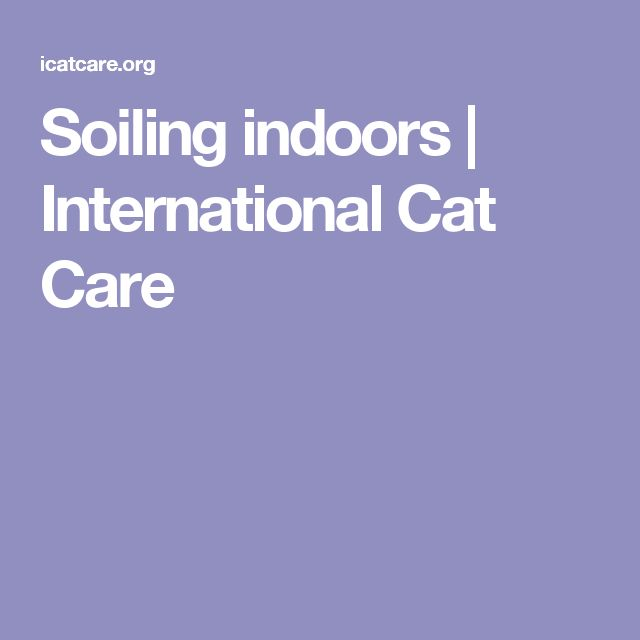 Soiling indoors | International Cat Care