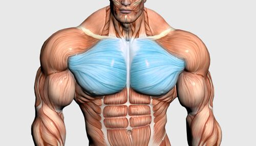 Don't be ashamed by your lack of gains at the pool this year. Attack your pecs from all angles and utilize drop sets with this intense chest workout!