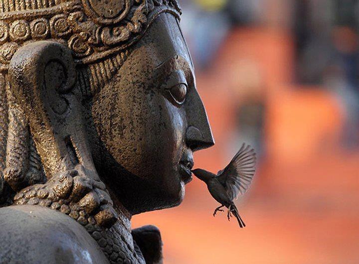 BUDDAH HUMMINGBIRD