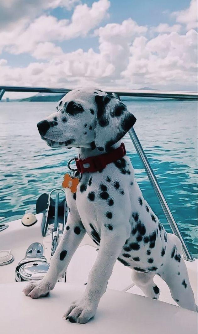 Pin By Hope Malika On Things I Love Cute Baby Animals Dalmatian