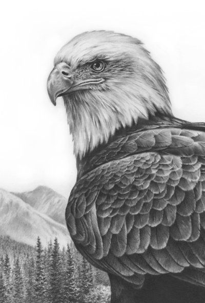 Pencil Art Gallery Eagles | bald eagle drawings