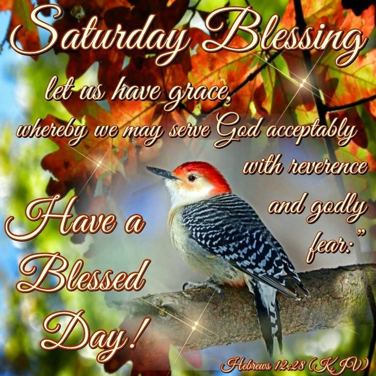 Good Morning Everyone Saturday : Ideas to try about saturday meme happy sabbath