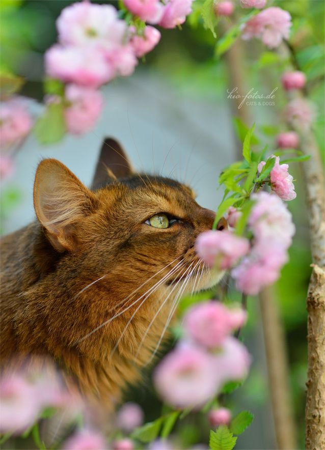 24 Best Stop Amp Smell The Flowers Images On Pinterest