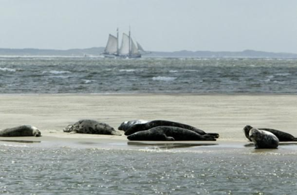 Wadden Sea, Netherlands/Germany.  http://www.worldheritagesite.org/sites/waddensea.html