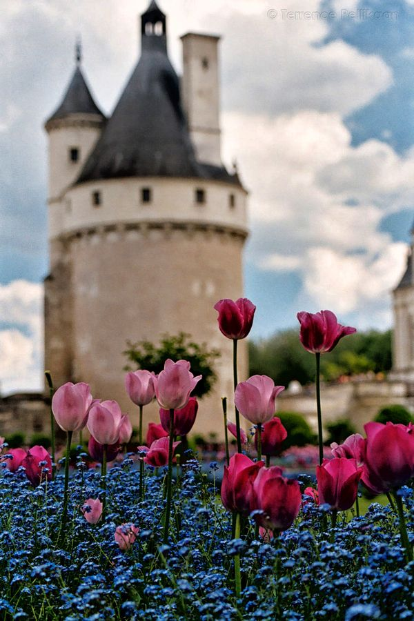 Chateau De Chenonceau Tulips In The Loire Valley France