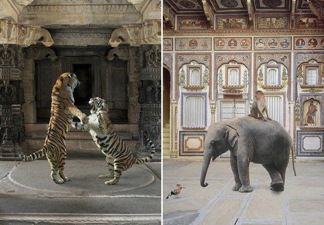 A riqueza visual da Índia já nos trouxe belos projetos de fotografia (como esse aqui), mas o de Karen Knorr é de uma originalidade incrível: a fotógrafa captou o interior de palácios, mesquitas e outros locais sagrados no norte da Índia, incluindo neles uma variedade de animais vivos, clicados em santuários e zoológicos no Rajastão. Interessada na cultura Rajput, Karen Knorr tenta explorá-la através da fotografia. A série India Song é um conjunto de imagens que têm algo de bizarras, mas…