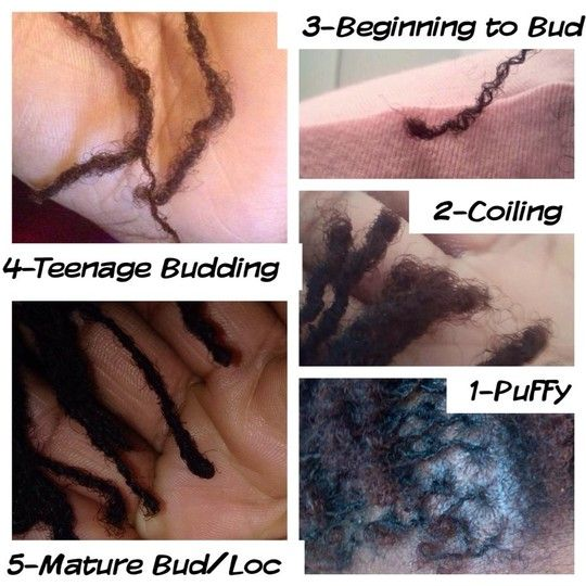 The stages of Sisterlocks