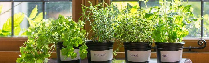 http://www.mangerbouger.fr/Le-Mag/Bien-etre/Faites-pousser-vos-plantes-aromatiques-en-interieur