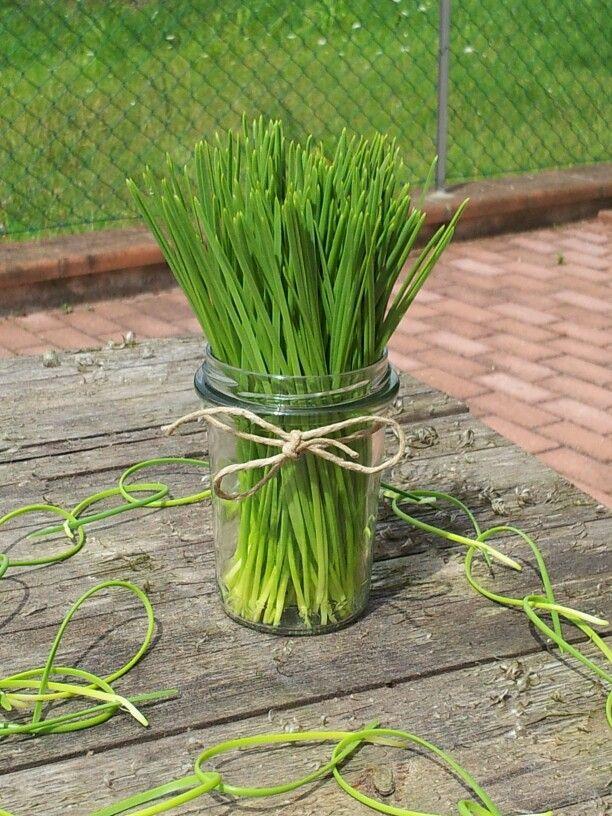 Aghi di pino - pine needles