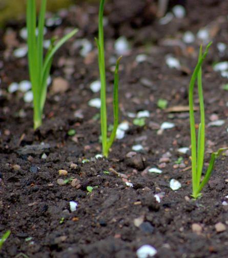 Orto fai da te: le fonti naturali di azoto per far crescere in salute le vostre piante - Ambiente Bio