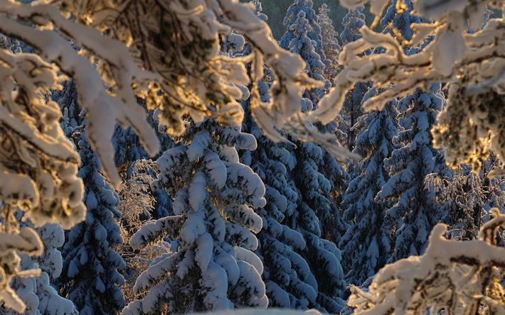 Download wallpapers winter landscape, forest, snow, sunset, snow-covered forest