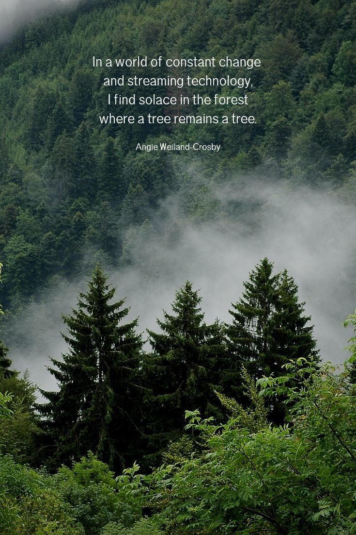 Nature Quotes for the Wandering Soul  Nature quotes trees, Nature
