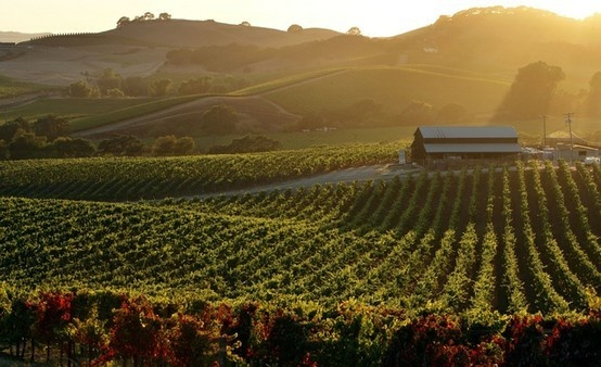 Sonoma...: Favorite Places, Wine Country, Sonoma California, Places I D, Sweet Sonoma, Sonoma Valley, Travel Ideas, Travel Lust, Bella Travel