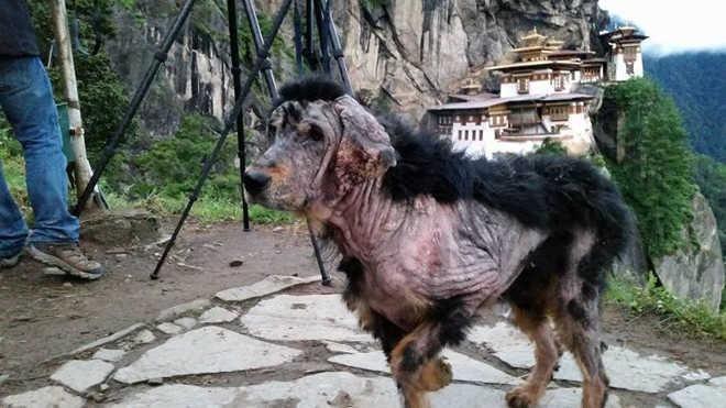 Un perro encontrado en una montaña se transforma por la amabilidad de un extraño