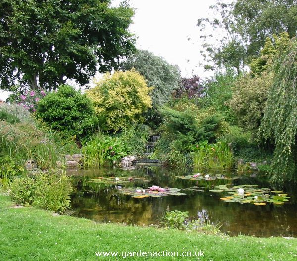 Natural Inspiration Koi Pond Design Ideas For A Rich And: 58 Best Images About Water Gardens On Pinterest
