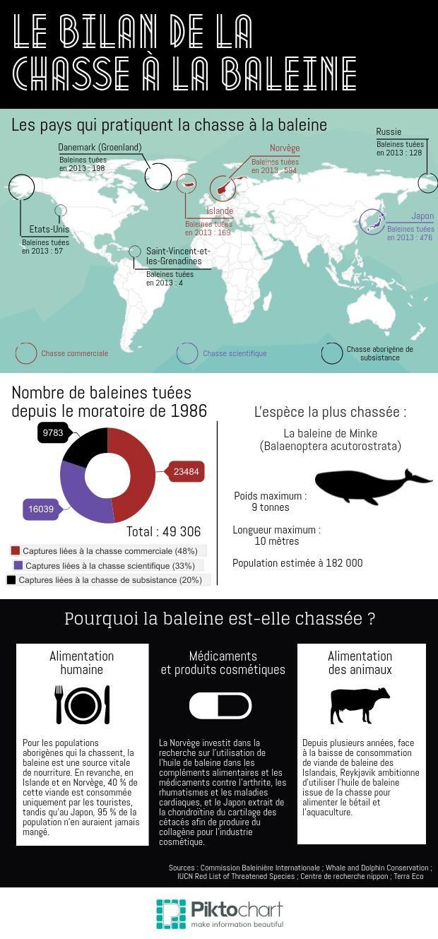En dépit de la mise en place, en 1986, d'un moratoire interdisant la chasse à la baleine à des fins commerciales, deux pays membres de la Commission Baleinière Internationale (CBI) ne se plient pas à la règle. Cette infographie fait le bilan de la situation.