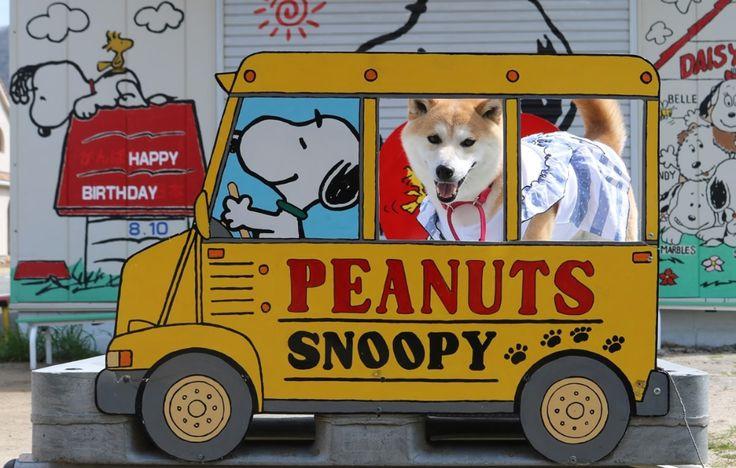 柴犬マイア スヌーピーアートに行ってきた 2021 スヌーピー カラフルなアート アート