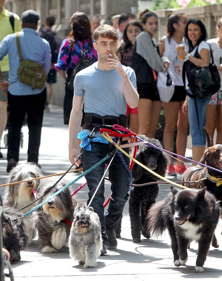 This is Daniel Radcliffe. Walking many dogs. While smoking a cigarette. In New York's Bryant Park.