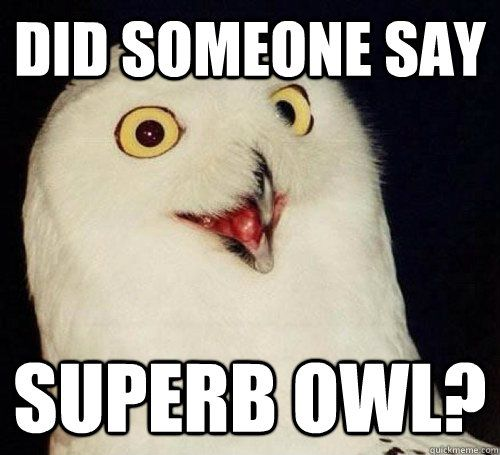 Using this during the Superbowl.... superb owl Superbowl...lol