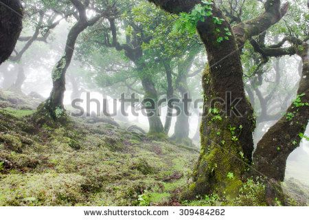 Fairy Forest, Laurel Forest in Madeira, Portugal - stock photo