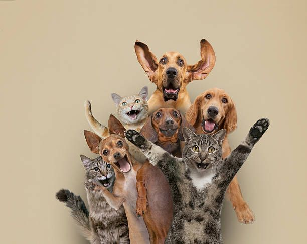 Dogs And Cats Posing And Waving Funny Dog Photos Cat Pose