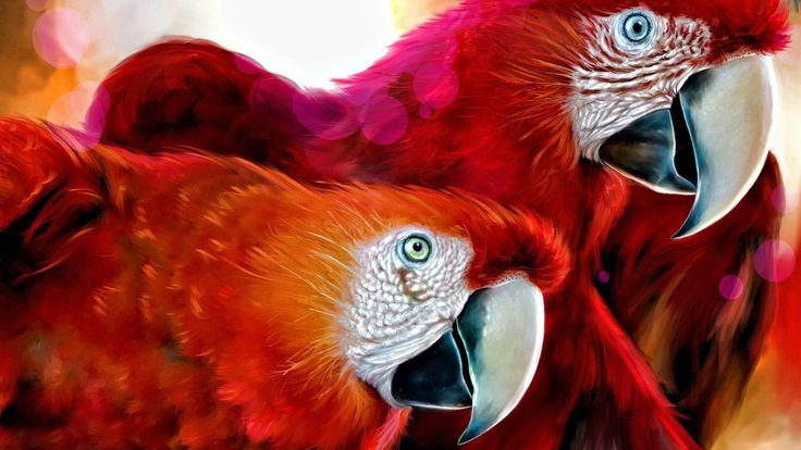 Parrot wallpapers; Bird wallpapers, wildlife wallpaers and pictures;