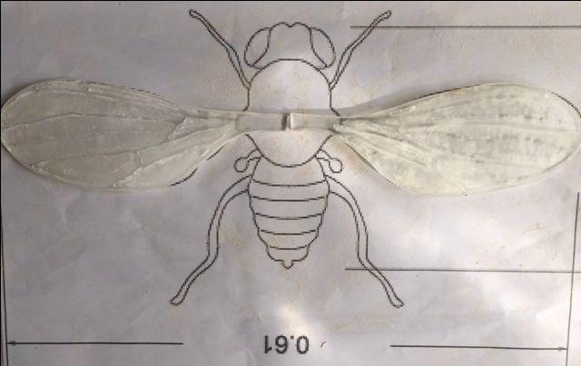 Ali in resina per drosophila melanogaster